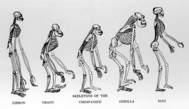 Essay comparing humans other primates